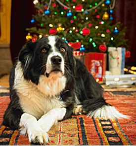 Holiday Safe Home For Your Pets