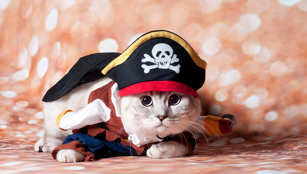 Cats, Canines and Crazy Costumes