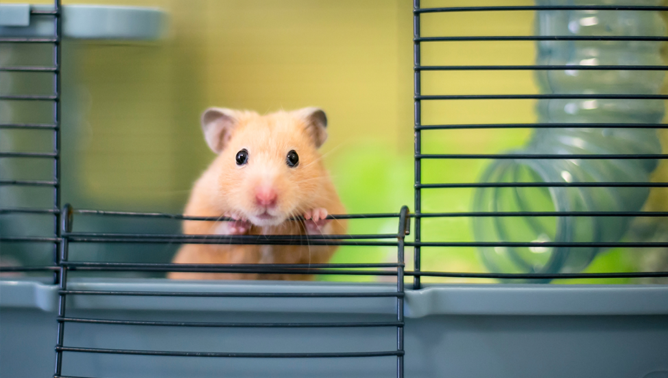 Ask Dr. Jenn: Are hamsters good first time pets for children?