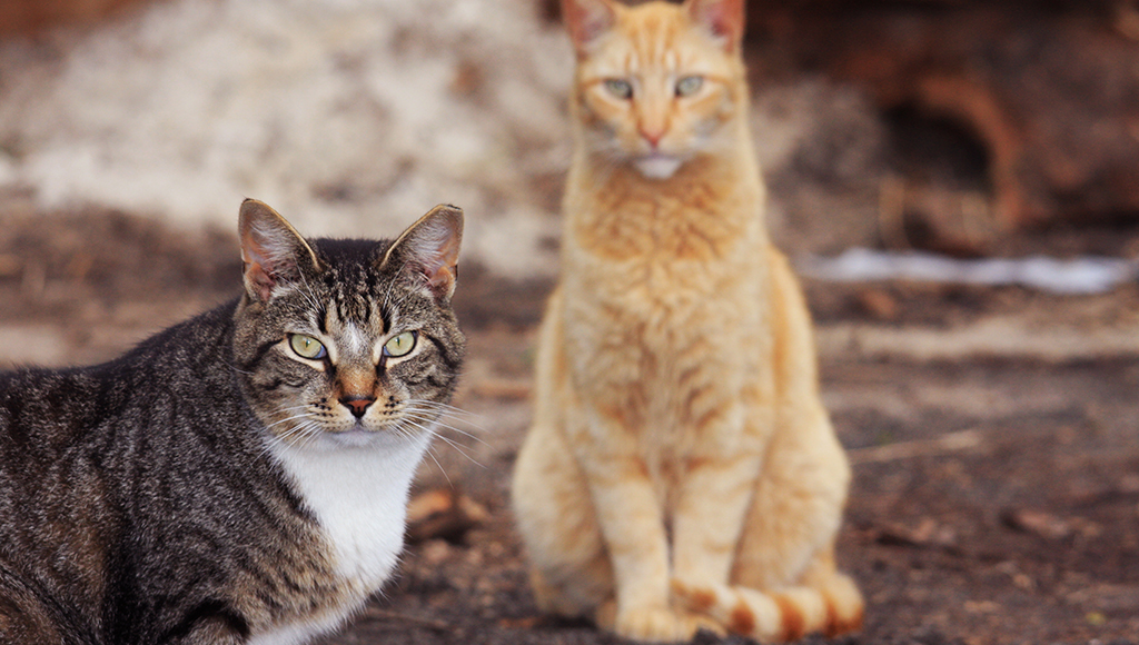 Can Feral Cats be Trained?