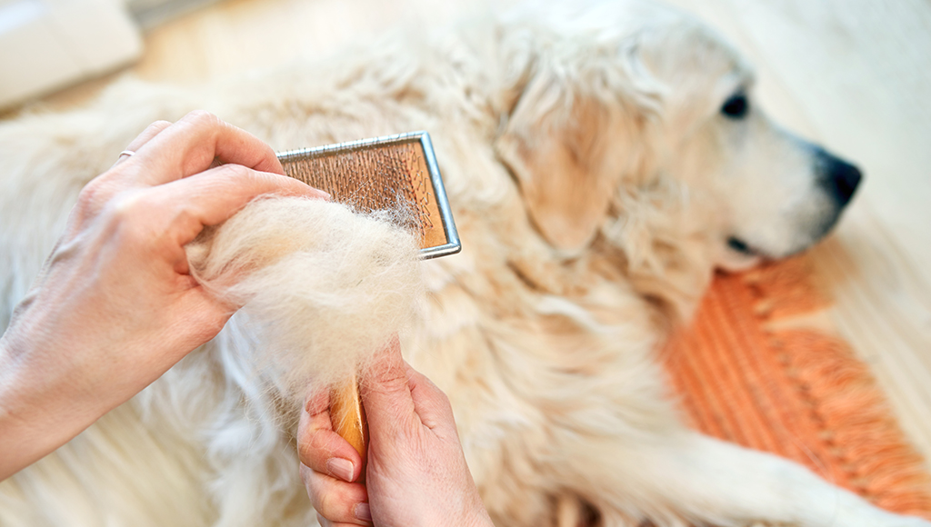 Grooming Tips for Warm Weather