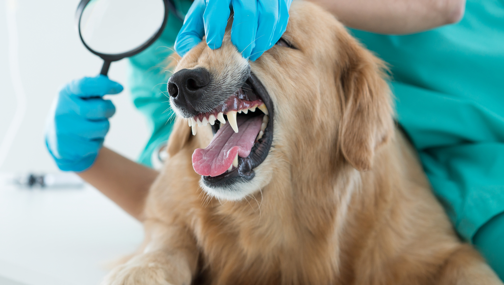 What Happens During a Dog's Dental Cleaning?