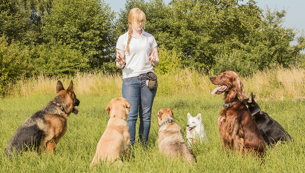Choosing a Training Facility For Your Dog