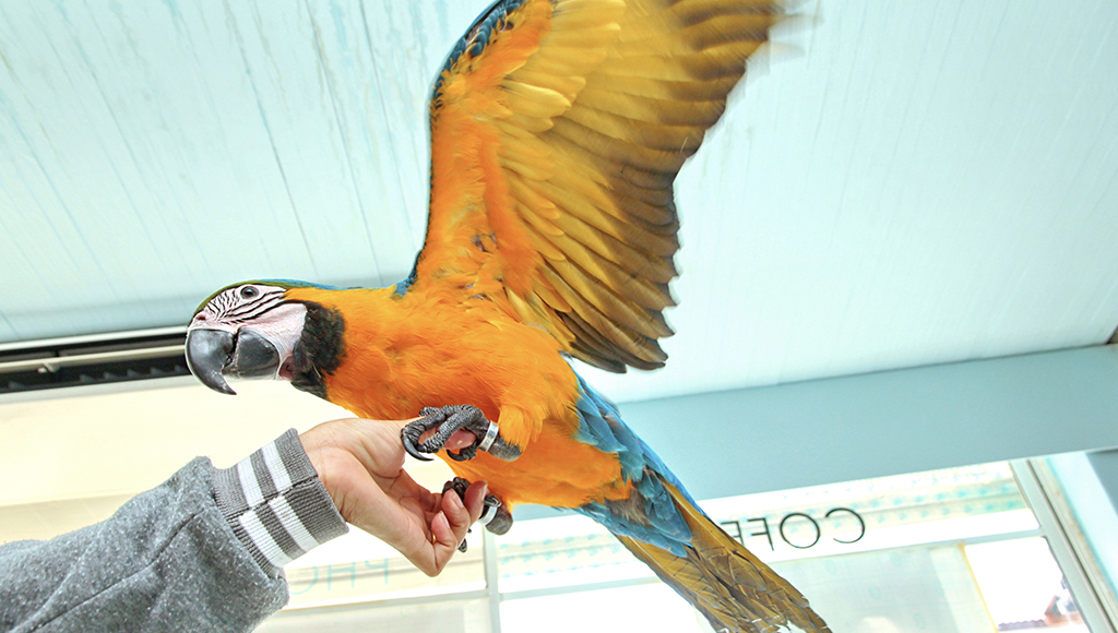 Controlling Bird Dust and Dander