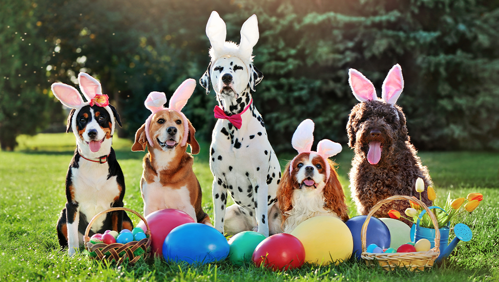Ask Dr. Jenn: How can I keep my pets safe during Easter festivities?