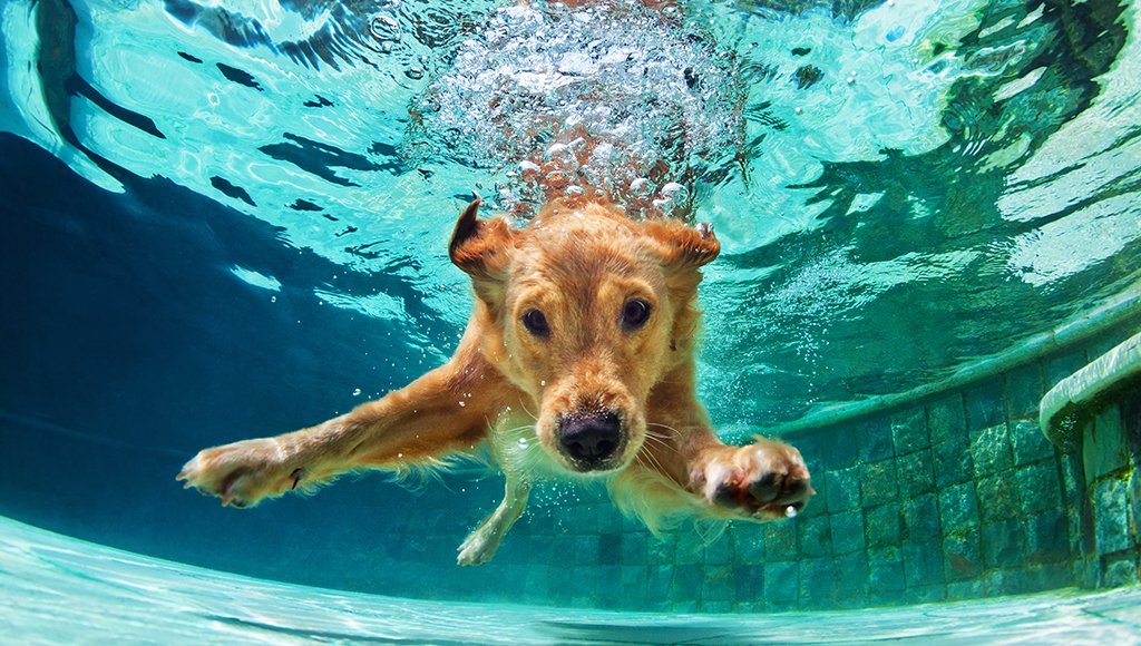 Do All Dogs Know How to Swim?