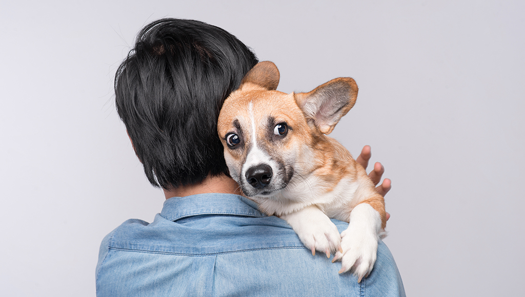 Recognizing Your Pet's Fears