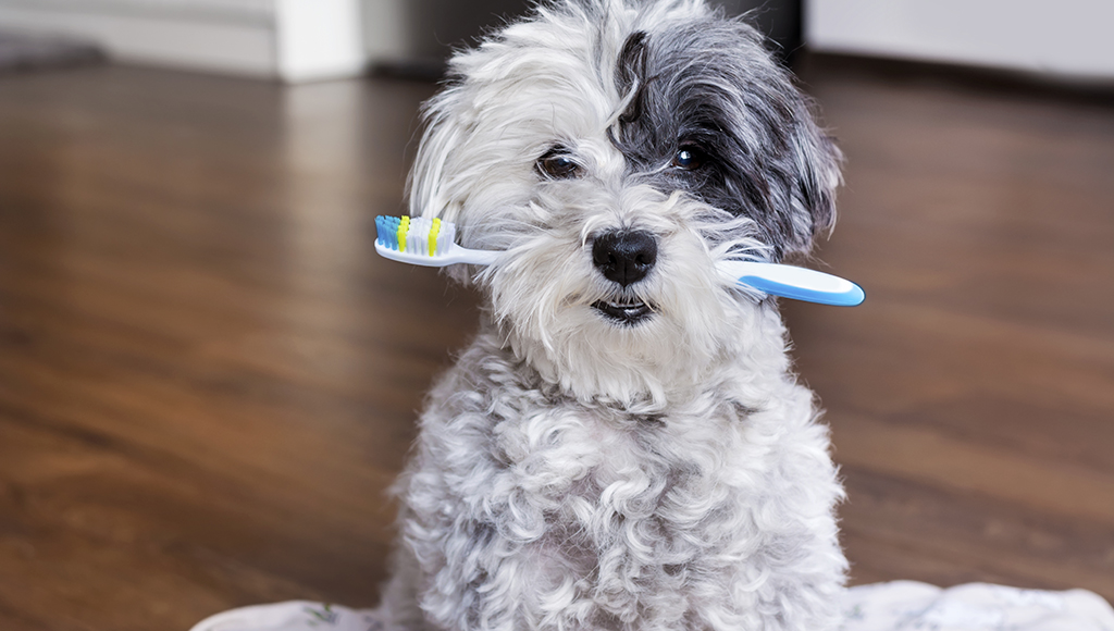 Brush Up On The Facts About Good Pet Dental Hygiene