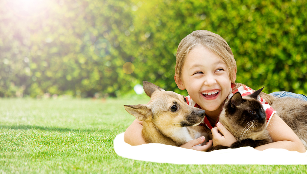 Diseases Transmitted by Pets: Toxocariasis