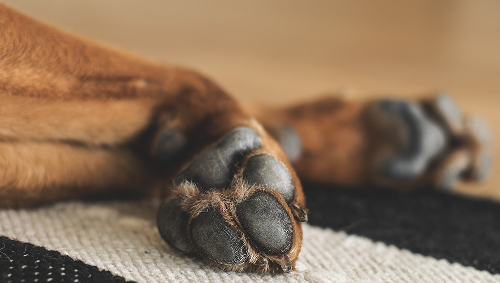 Paw Problems: Burns, Blisters and Sores