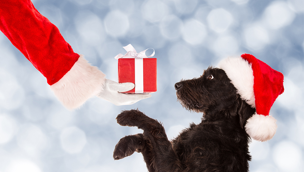 Great Gift Ideas For Cats and Dogs