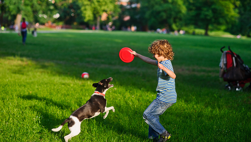 Outdoor Fun With Your Pooch!