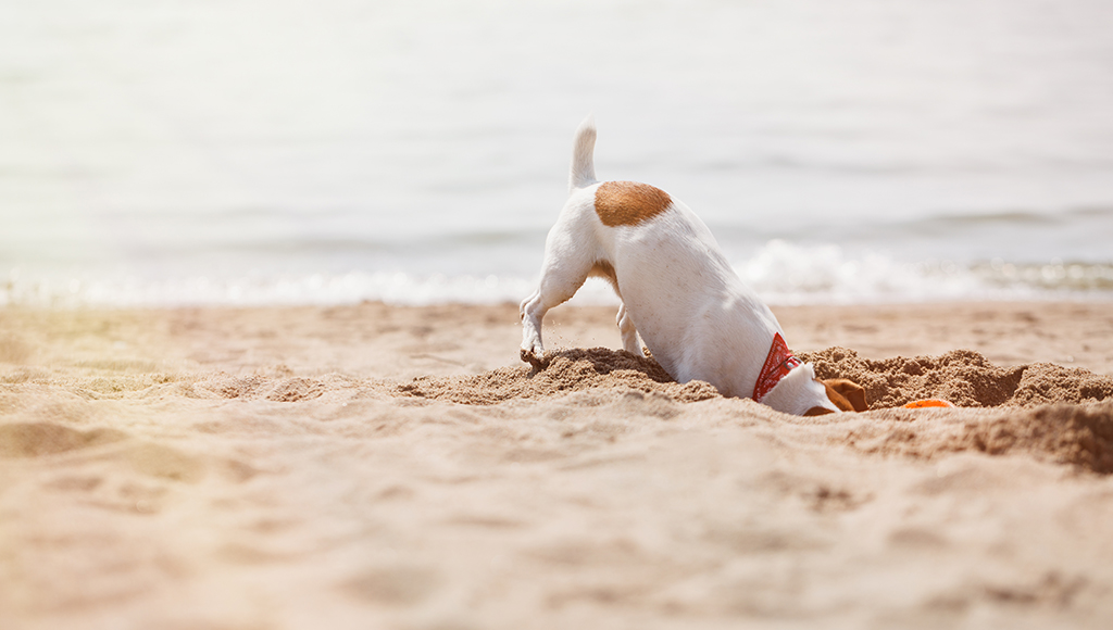 Understanding Why Dogs Dig