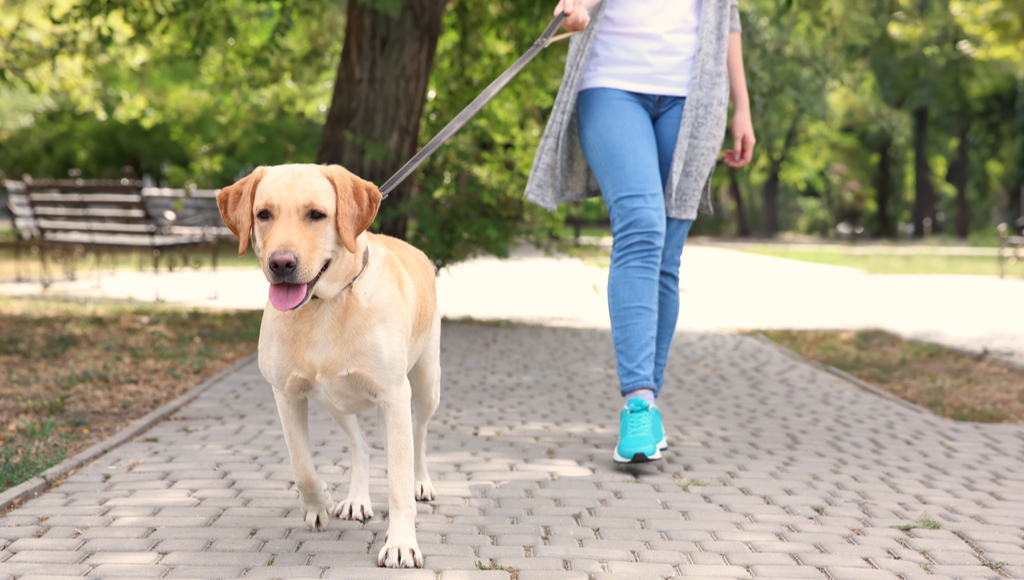 Walking My Human (Our Humans Need Exercise Too!)