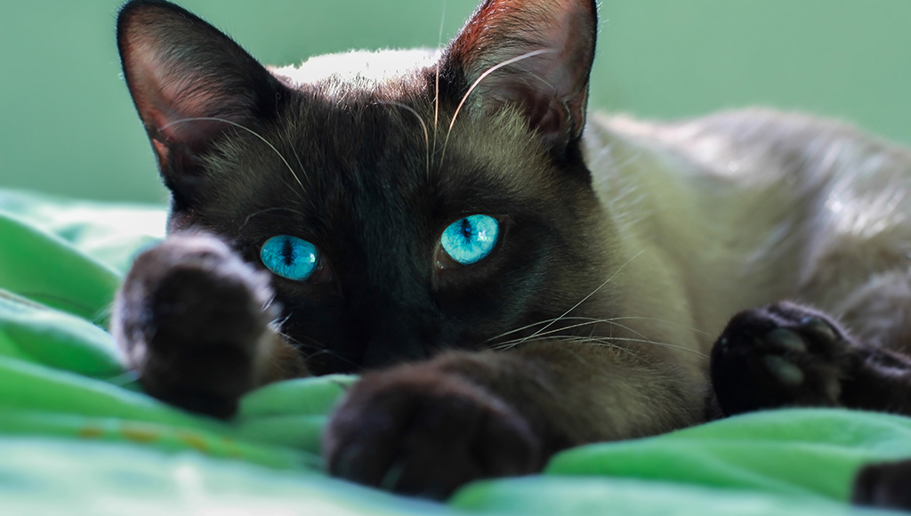 Ever Wondered Why? Curious Facts About Cats - Conclusion