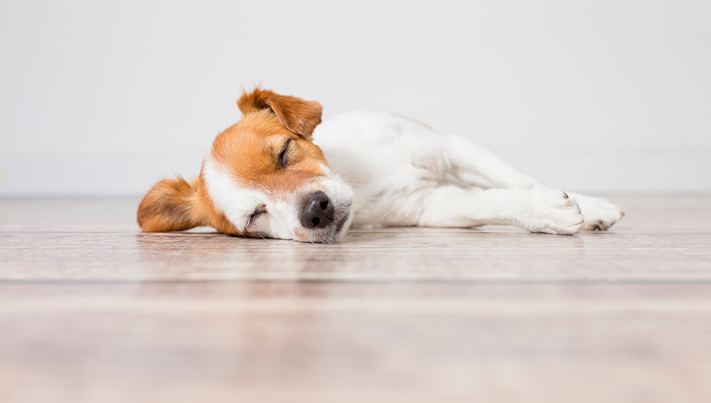 Seizures in Cats and Dogs - What You Need To Know