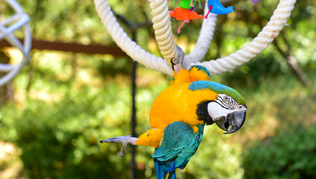 Selecting the Proper Toy For Your Parrot