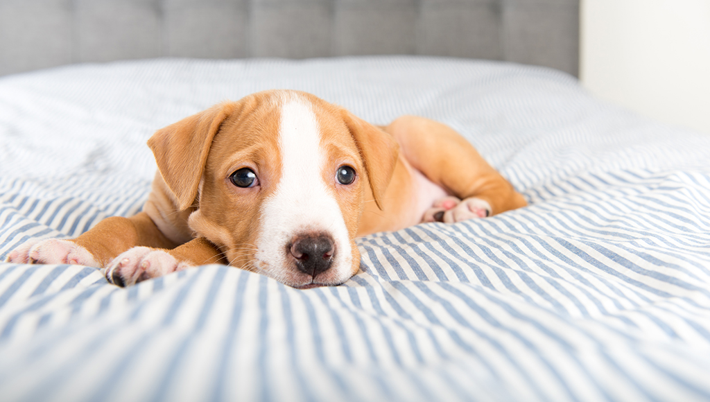 Canine Parvovirus: Care and Recovery