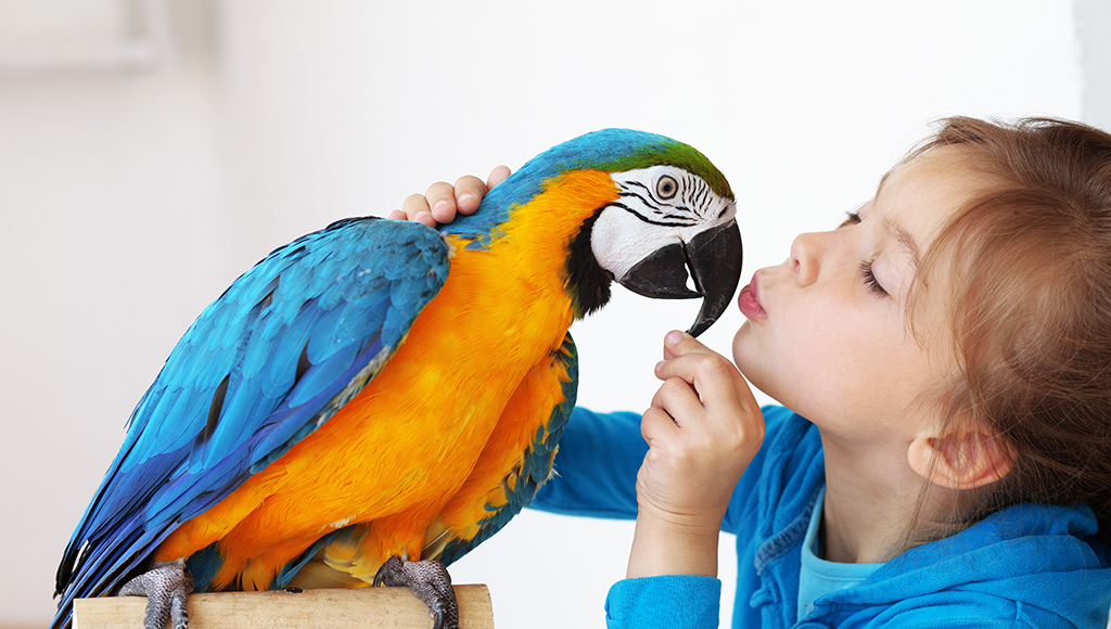 Diseases Transmitted by Pet Birds