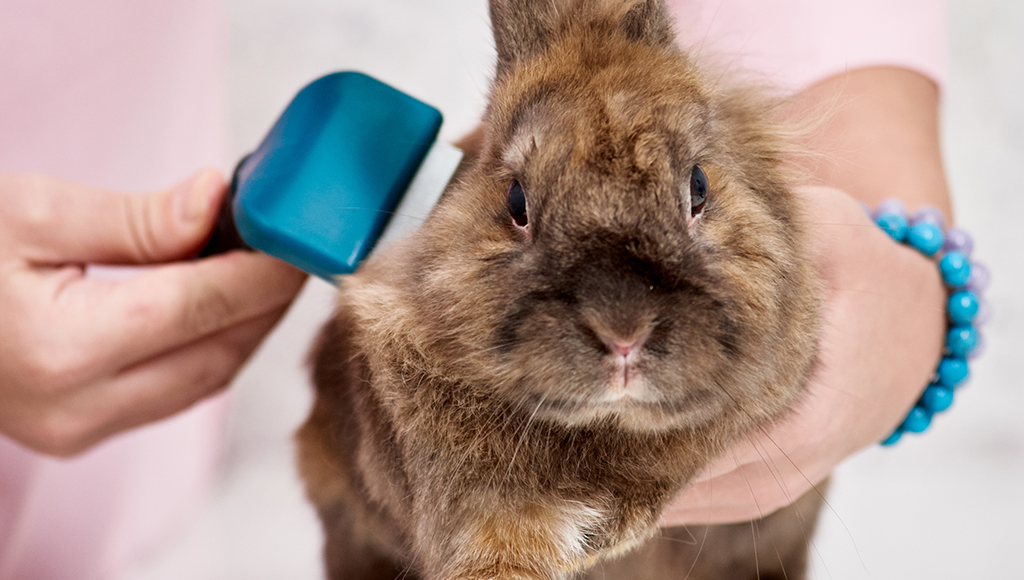Good Grooming Habits for Rabbits