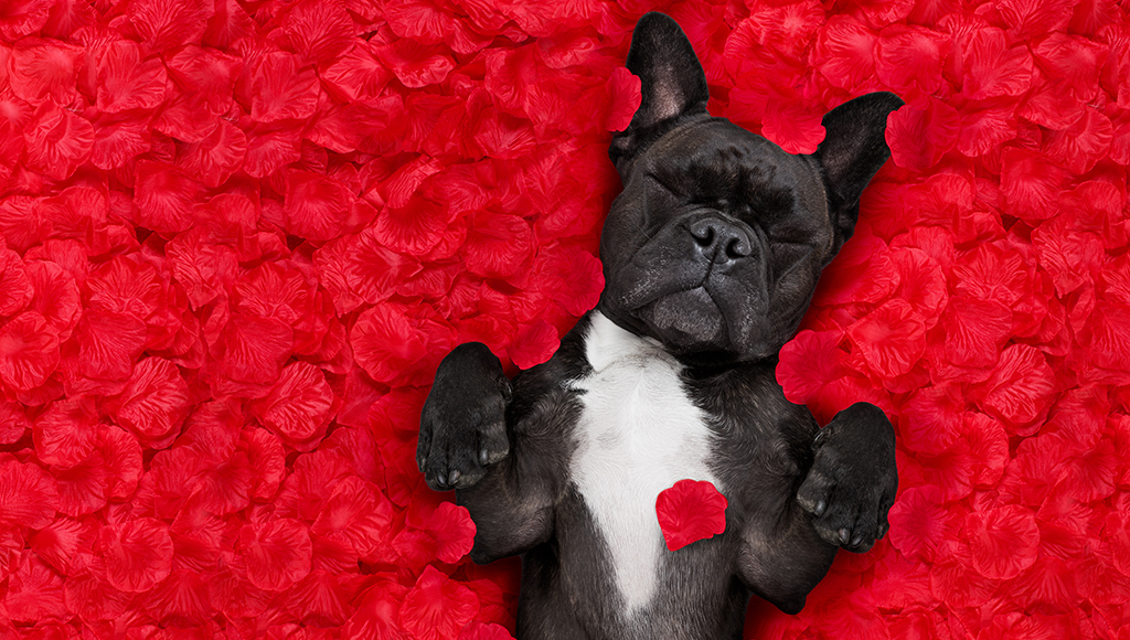 Special Gifts For Your Furry Valentine!