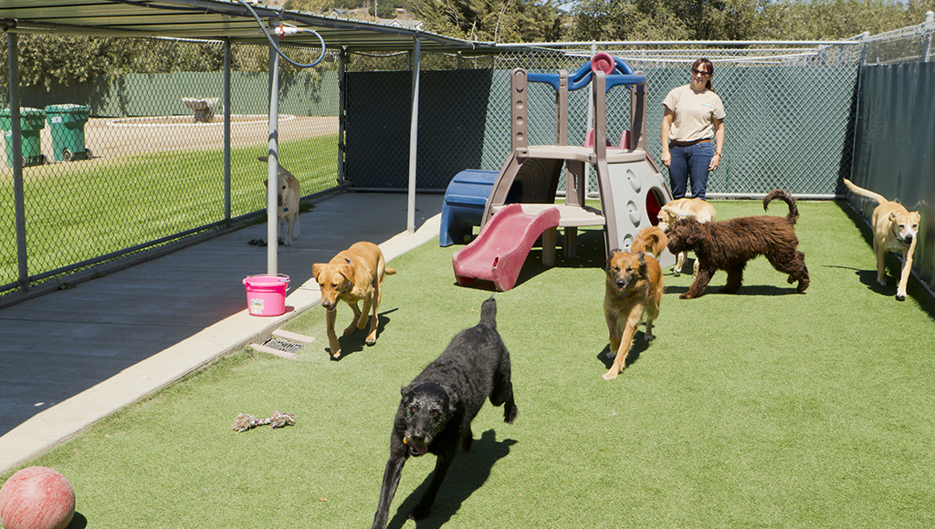 Choosing a Kennel For Your Pet