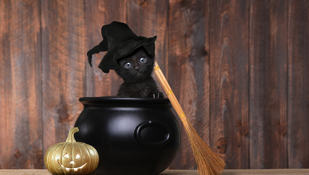 Halloween Safety For Your Cat