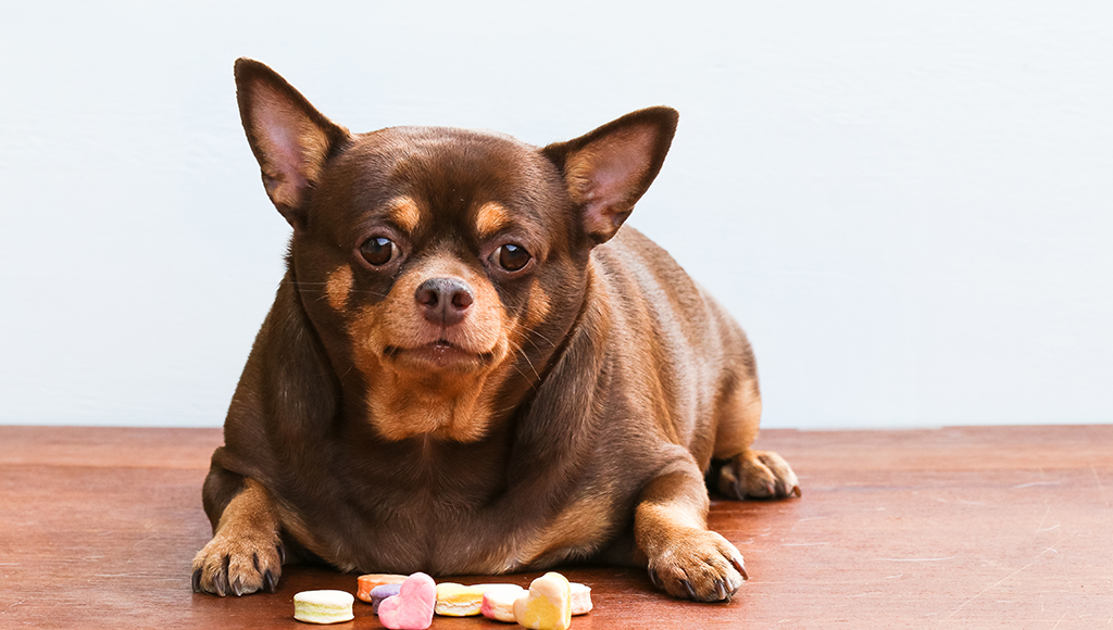 Dr. Elliott: Diabetes and Your Pet