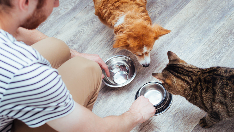 Ask Dr. Jenn: Is it okay to switch up my pet's diet?