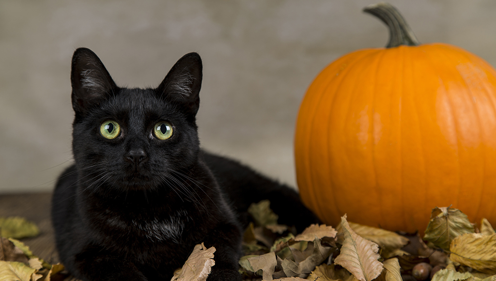 Keeping Your Cat Safe at Halloween