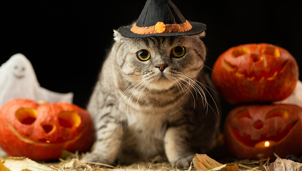 Halloween Safety Tips For Felines
