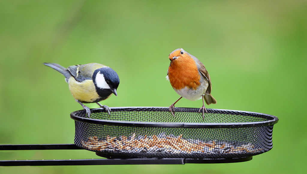 Care and Feeding of Wild Birds