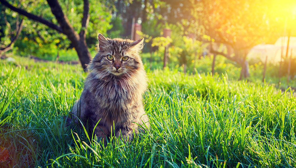 Ask Seth: Outdoor Cat With Abscess