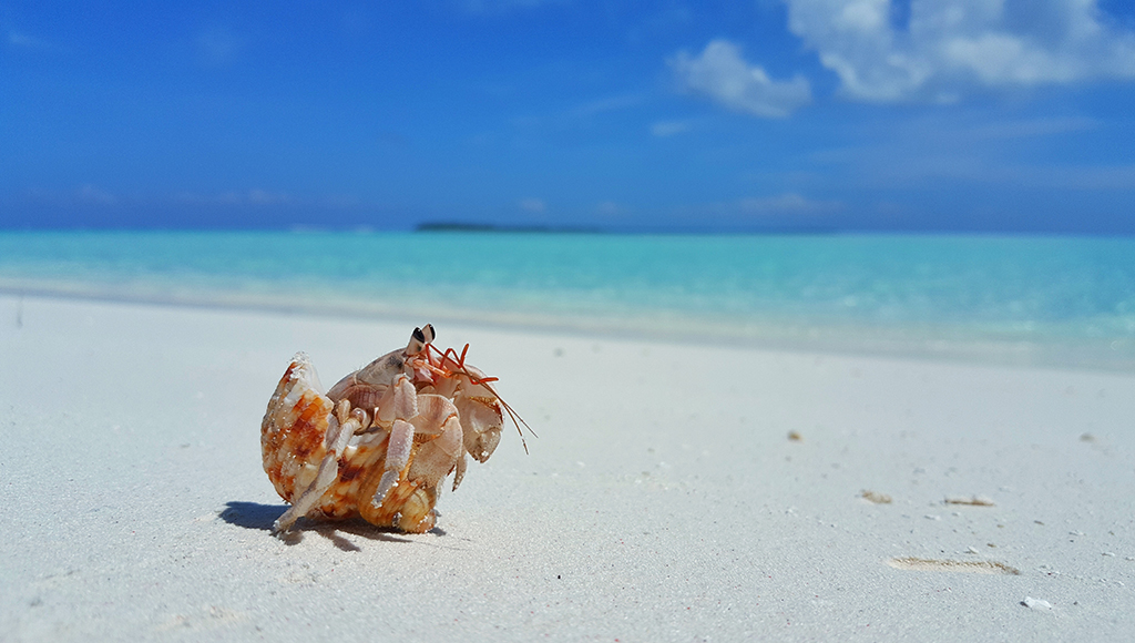 How About A Hermit Crab?