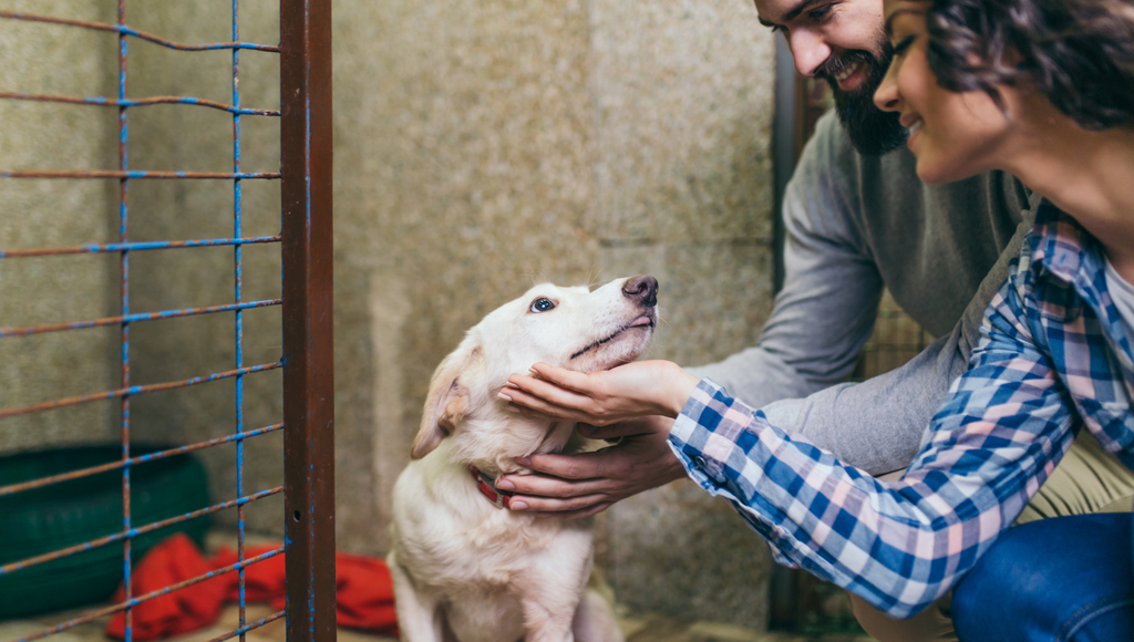 What To Expect When Adopting A Shelter Pet