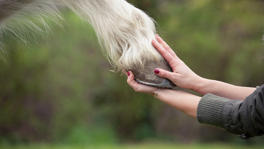 Hoof Care is Essential to Your Horse's Health