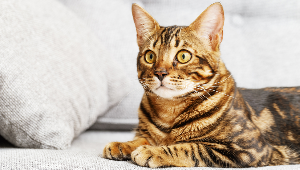 Ask Dr. Jenn: Do indoor cats need regular vet visits?