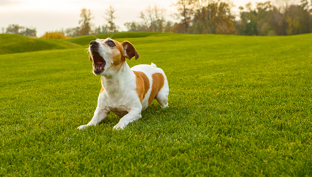 Obsessive Compulsive Behavior in Dogs