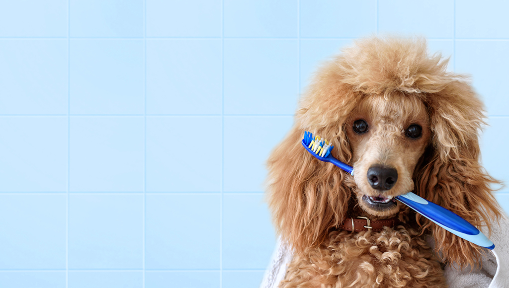 Important Oral Hygiene Tips and Facts For Pets