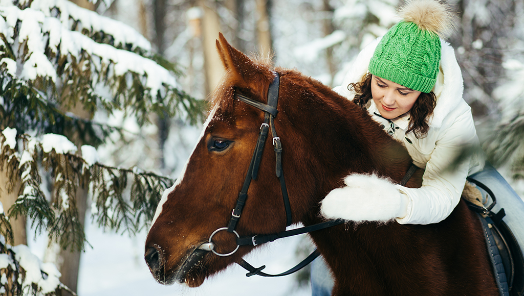 Winter Care for Horses
