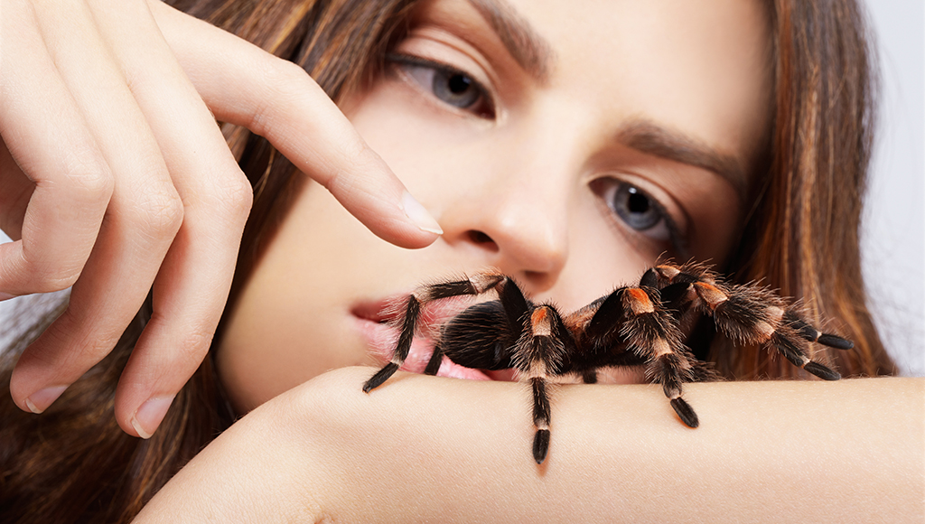 Guidelines for Choosing A Pet Spider
