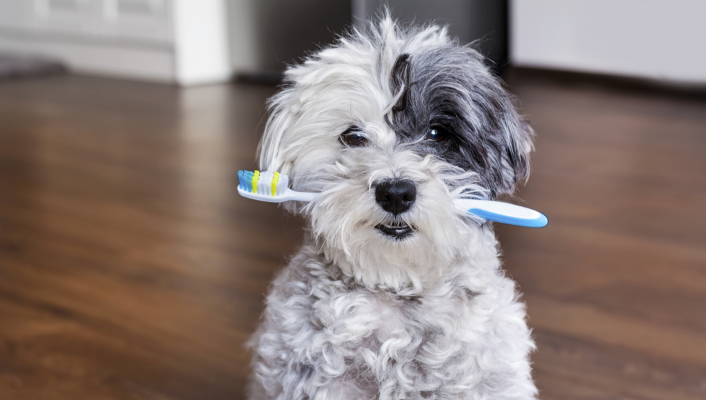 How Do I Know If My Dog or Cat Has Dental Problems?