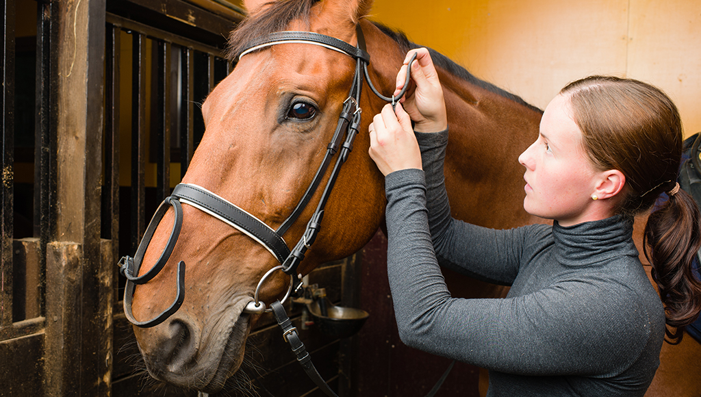 Choosing a Bridle For Your Horse - Leather or Synthetic?