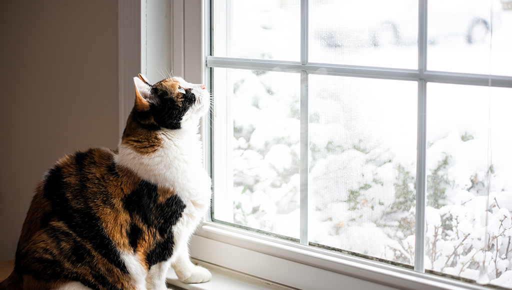 Do Cats Get Cabin Fever in Winter?