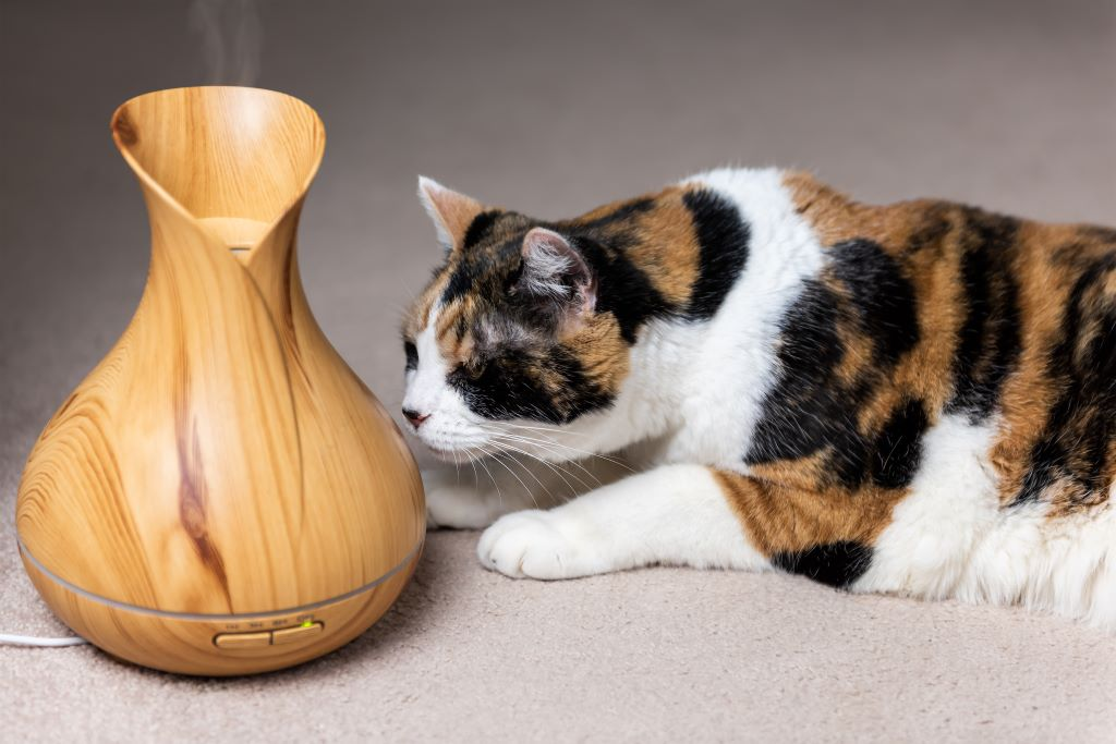 Are Essential Oils Safe for Your Pet?
