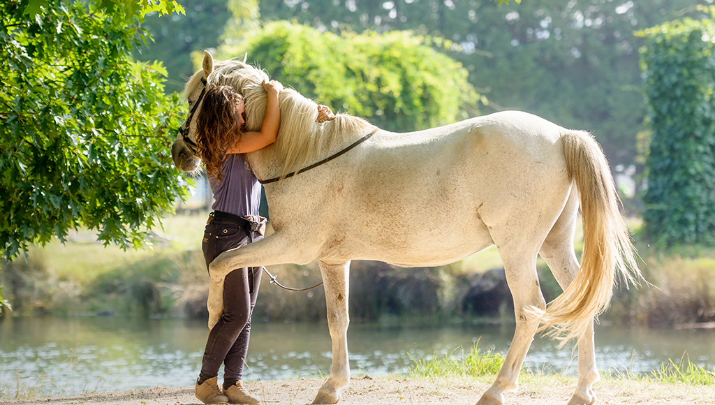Equine Care: Keeping Legs Strong and Healthy