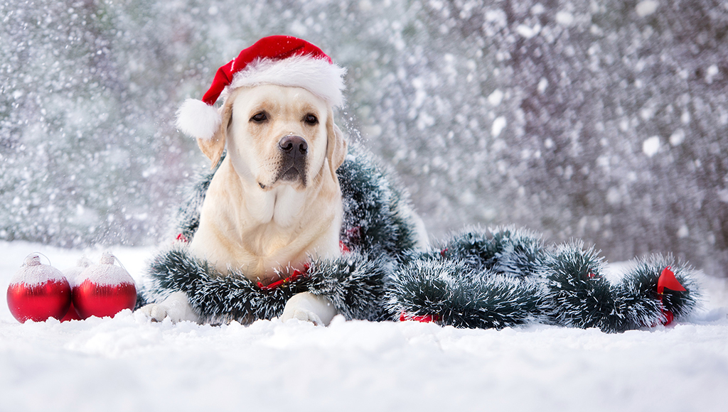 Ask Seth: Keeping my dog healthy during the holidays