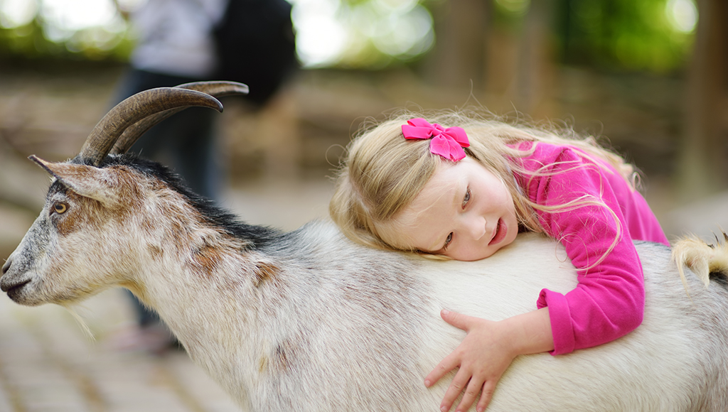 From the Farm: Goats as Pets
