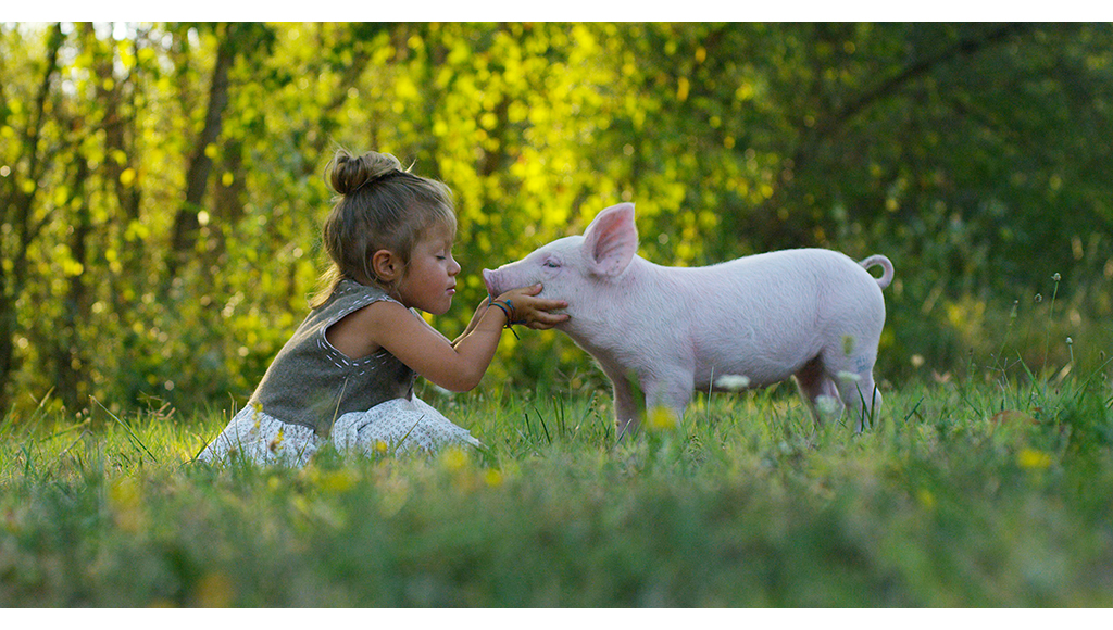 From the Farm: How About a Pig?