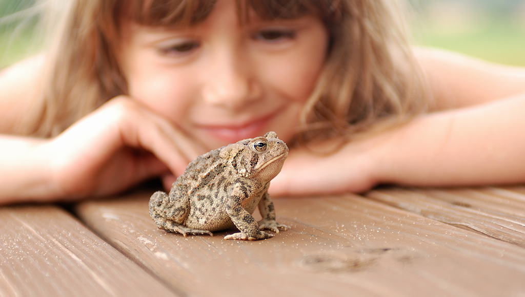 Pet Frogs Can Keep You Hopping!